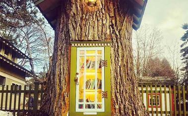 Könyvtár egy 110 éves fa törzsében