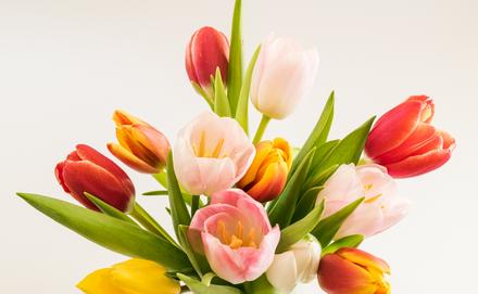Vágott tulipán csokor frissen tartása